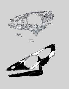 Wapitsaurus s