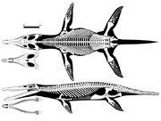 Kronosaurus-skeleton