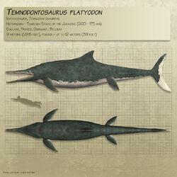 Temnodontosaurus by paleoguy-dbfmg90