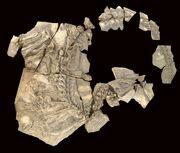 Concavenator fossils 01