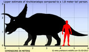 Anchiceratops-size
