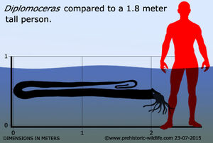 Diplomoceras размеры