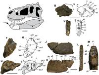 Nanuqsaurus 3