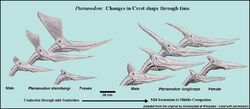 CrestAnatomy
