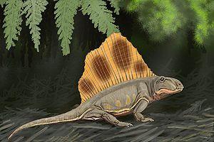 300px-Dimetrodon loomisi DB