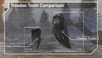 Троодон зубы