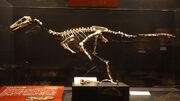 Gobivenator fossils