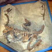Plateosaurus fossil