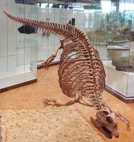 Плакод скелет