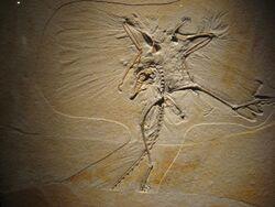 Archaeopteryx Thermopolis Specimen