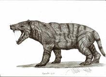 Hyaenodon gigas by teratophoneus-d4n0hrm