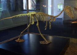 Альваресзавр скелет