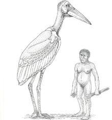 Гигантский марабу и человек флоресский