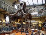 Mammuthus meridionalis Paris