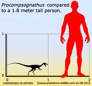 Procompsognathus-size