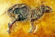 Пропалеотерий скелет