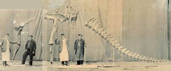 Composite photograph showing Alfred Leeds standing next to the mounted arm and rear skeleton of Cetiosauriscus