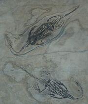 Диноцефалозавр6