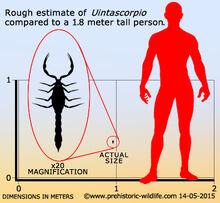 Уинтаскорпио размеры