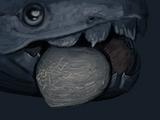Мегалодон (моллюск)
