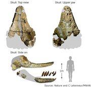 Peru 2011 fossil
