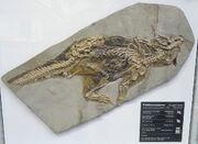 Psittacosaurus mongoliensis SMF R 4970