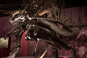Гилмореозавр скелет