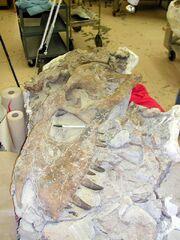 Bistahieversor fossils