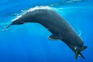 Дельфин с марса