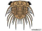 Одонтоплевриды