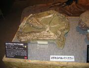 Omeisaurus skull 02