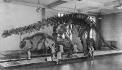 Postcard of Brontosaurus for 1933 AMNH