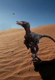 Raptor 08