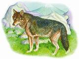 Японский волк