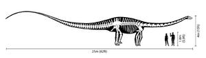 Diplodocus size comparison
