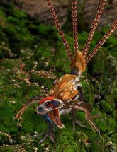 Epidexipteryx hui2