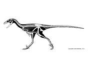 Stenonychosaurus sk