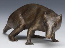 710 01 mammalia morganukodon1