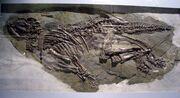 Jinzhousaurus fossil
