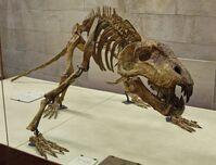 Titanophoneus potens (fossil)