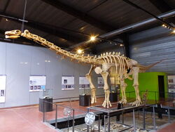 Ампелозавр 2