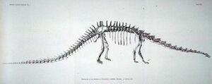 Diplodocus (Нatcher, John Bell. , 1901)