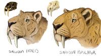 Smilodon head studies by minionwolf711-daj2ixv