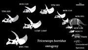 Triceratops ontogenez