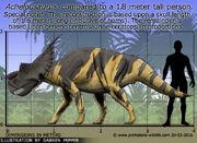 Achelousaurus-size