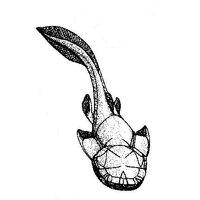Austrophyllolepis 3