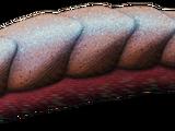 Кулиндроплакс