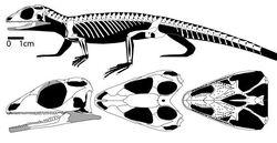 Gephyrosaurus (реконструкция)