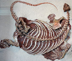 250px-Cotylorhynchus romeri