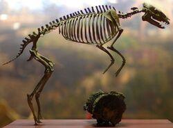 Эогиппус скелет реконструкция